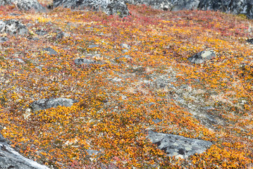 Lichen and tundra vegetation