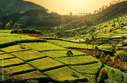 Foto op Plexiglas Indonesië Field in Indonesia