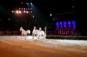 Beautiful lusitano horses