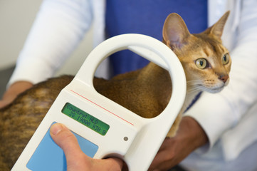 Checking for Microchip implant by cat