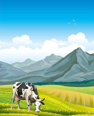 Cow and green meadow.