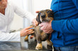 Having fear for the veterinarian