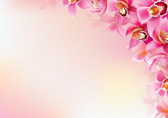 Background of orchids