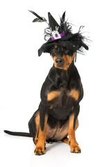 Hund als Hexe