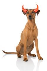 Hund als Teufel