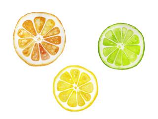 オレンジ・レモン・ライムの水彩イラスト