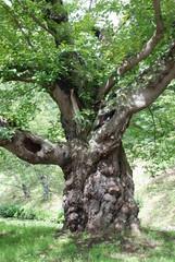 大きな大きな木