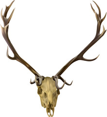 brown isolated deer antlers illustration