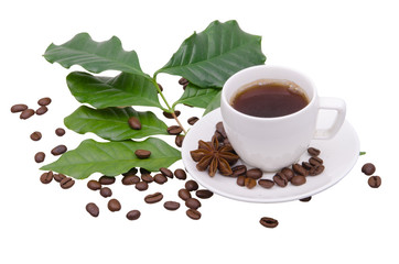 Coffee tree leaves, coffee beans and cup of coffee