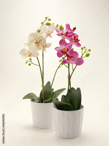 canvas print picture Orchidea