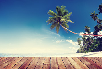 Beach and Palm Tree with Wooden Plank