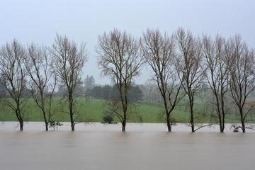 Natural disaster - Flood