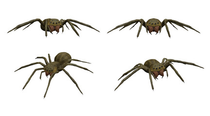 3D rendered scary spider