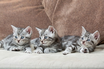 three kitten brothers