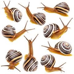 Set of the garden snail