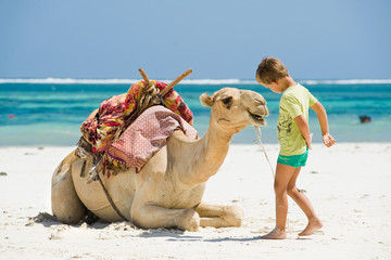 child and a camel on the beach
