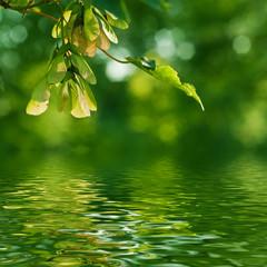 nature zen- érable