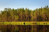 Serene sunny morning forest reflection poster