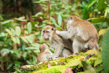 Monkey family taking care of each others