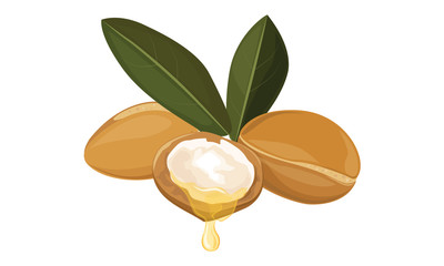 Argan oil, vector illustration