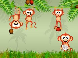 monkeys eat the coconut