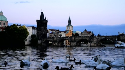 Swans On The Vltava River In Prague At Dusk, locked down