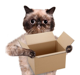 mail cat in with a big moving box