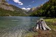 Stump by Lake MacDonald.