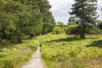Wanderer in der Lüneburger Heide