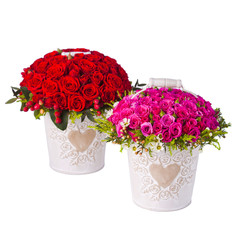 Bunch pink roses and red in bucket. Isolated on white background