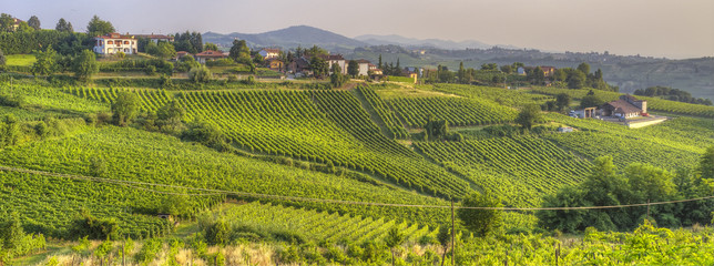 Oltrepo Pavese vineyards. Color image