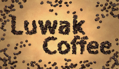 Luwak Coffee Coffee Bean on Old Paper