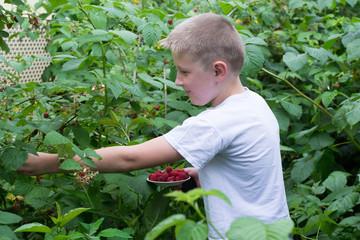boy in the bushes of raspberries