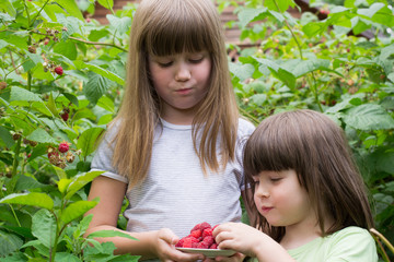 two little girls in the bushes of raspberries