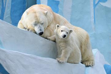 Медведица с дитёнышем.