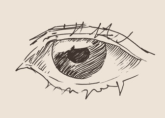 the Eye (new look) vintage illustration, engraved style