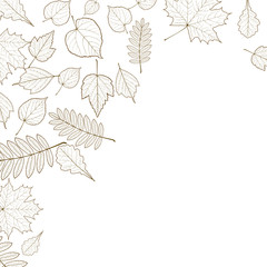 Autumn color leaves background template.