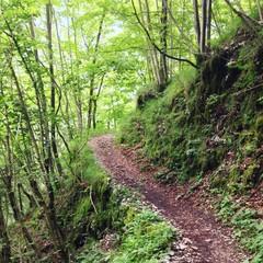 Weg durch Wald im Sommer © Robert Kneschke
