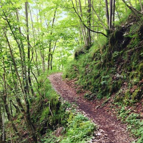 Weg durch Wald im Sommer
