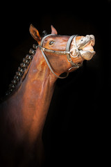 Portrait of smiling bay stallion on black background