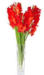 Red gladiolus in vase