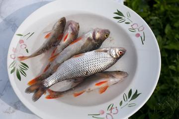 small raw fish