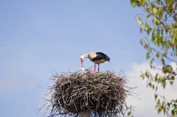 white stork in nest on sky background