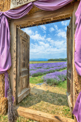 Lavender in Provence, HDR