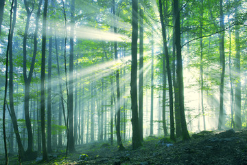 Beautiful sunny morning forest
