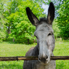 donkey in the park