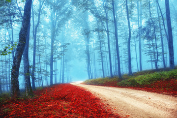 Mysterious colorful forest