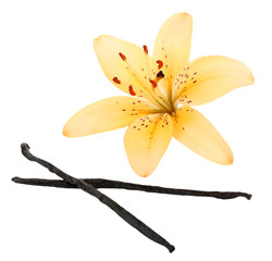 Lily flower and vanilla sticks isolated on white