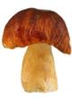 Fresh mushroom isolated on white