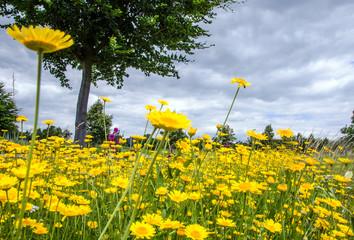 Entspannung auf Blumenwiese unter Baum :)
